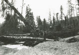 Photograph documenting effects of logging, possibly near Whitewater Bay, ca. 1946.