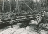 Photograph documenting effects of logging, Whitewater Bay, 1946.