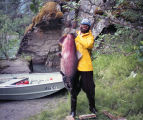 Alaska Dept. of Fish and Game employee Charlie Branch holds a king salmon on the Tahini River,...